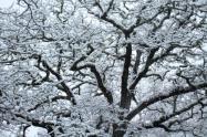 vertine neve 23 gennaio 2019 (50)