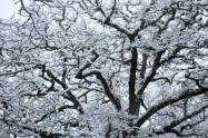 vertine neve 23 gennaio 2019 (51)