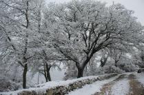 vertine neve 23 gennaio 2019 (58)