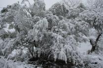 vertine neve 23 gennaio 2019 (66)