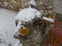 vertine neve 30 gennaio 2019 (13)
