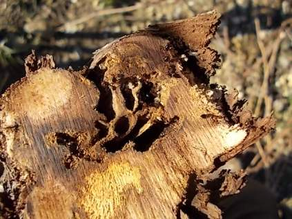 nido rizzaculi nel sangiovese (3)
