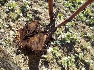 nido rizzaculi nel sangiovese (6)