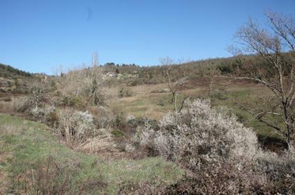 la valle dei pruni fioriti (12)
