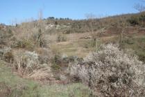 la valle dei pruni fioriti (13)