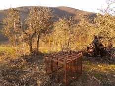 potatura ulivi vertine 2019 (15)