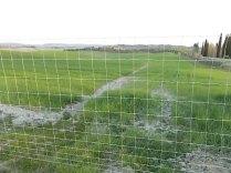 recinzione vigna castelnuovo berardenga (1)