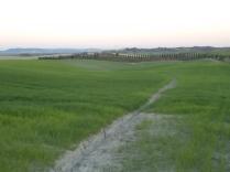 recinzione vigna castelnuovo berardenga (3)