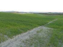 recinzione vigna castelnuovo berardenga (5)