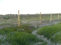 recinzione vigna castelnuovo berardenga (7)