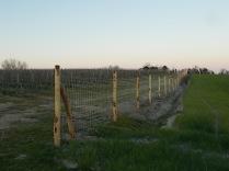 recinzione vigna castelnuovo berardenga (9)