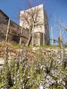 vasco e le fave fiorite dell'orto (12)