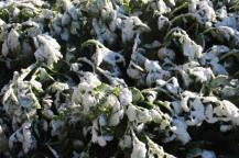vertine neve 12 marzo 2019 (12)