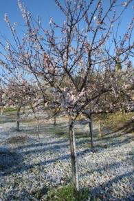vertine neve 12 marzo 2019 (15)