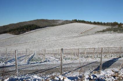 vertine neve 12 marzo 2019 (31)