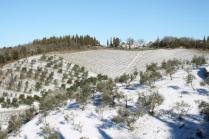 vertine neve 12 marzo 2019 (37)
