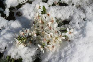 vertine neve 12 marzo 2019 (50)
