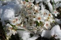 vertine neve 12 marzo 2019 (51)