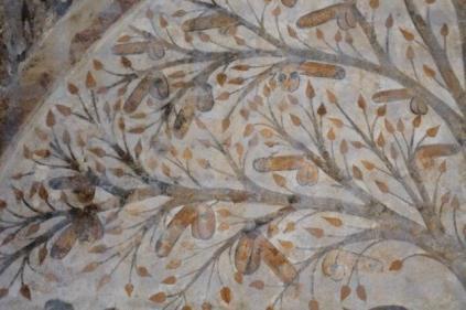 albero dei piselli, abbondanza massa marittima (2)
