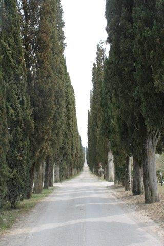arceno il viale dei cipressi e dei fiori gialli (14)
