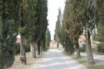 arceno il viale dei cipressi e dei fiori gialli (4)