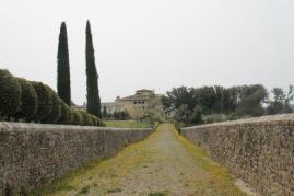 arceno il viale dei cipressi e dei fiori gialli (9)