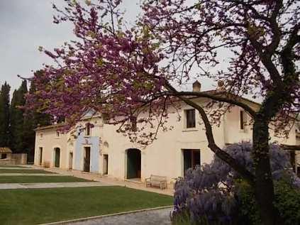felsina, giaggiolo iris, albero di giuda, glicine, limoni (11)