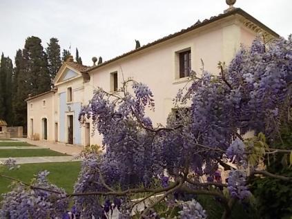 felsina, giaggiolo iris, albero di giuda, glicine, limoni (15)