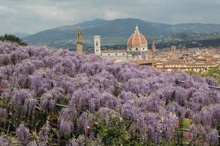 glicine villa bardini 2019 (18)