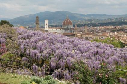glicine villa bardini 2019 (23)