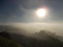 rondine, nebbia, berardenga, quercia (1)
