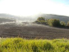 rondine, nebbia, berardenga, quercia (13)