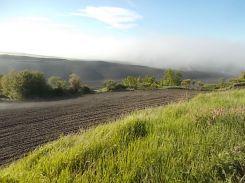rondine, nebbia, berardenga, quercia (14)
