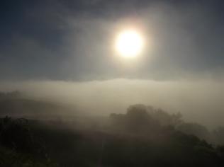 rondine, nebbia, berardenga, quercia (2)
