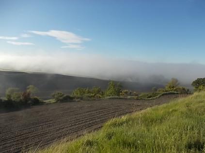 rondine, nebbia, berardenga, quercia (24)