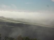 rondine, nebbia, berardenga, quercia (25)