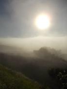 rondine, nebbia, berardenga, quercia (3)