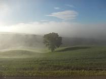 rondine, nebbia, berardenga, quercia (8)