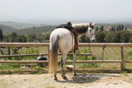san gusmè, lettore, cavalli, vigne arceno (1)