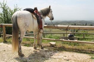 san gusmè, lettore, cavalli, vigne arceno (10)