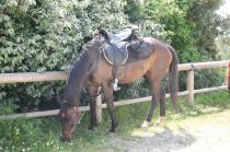 san gusmè, lettore, cavalli, vigne arceno (2)