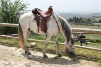 san gusmè, lettore, cavalli, vigne arceno (3)