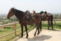 san gusmè, lettore, cavalli, vigne arceno (4)