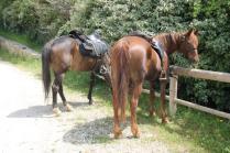 san gusmè, lettore, cavalli, vigne arceno (5)