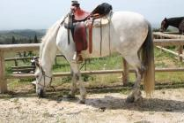 san gusmè, lettore, cavalli, vigne arceno (8)