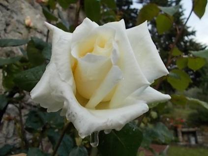 fiori di maggio (5)