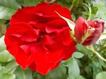 fiori di maggio (6)