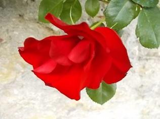 fiori di maggio (7)