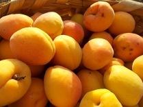 albicocche vertine (12)