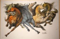 mostra cavalli in palio di roberto di jullo (2)